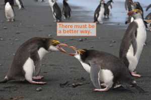 Image of Two Penguins fighting